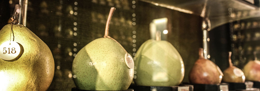 A610-Museo-Frutta